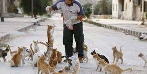 Cat Man of Syria: Ambulance Driver Spends Savings Feeding Orphaned Cats