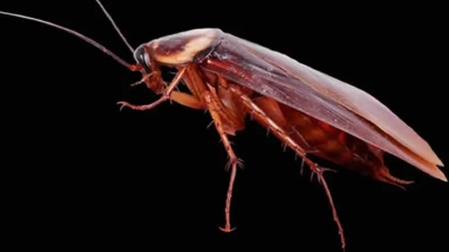 Indian Doctor Pulls Live Cockroach From Woman's Skull