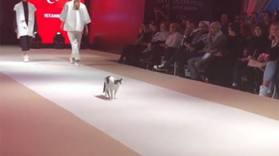 Catwalk for Cats: Feline Steals Fashion Show in Turkey